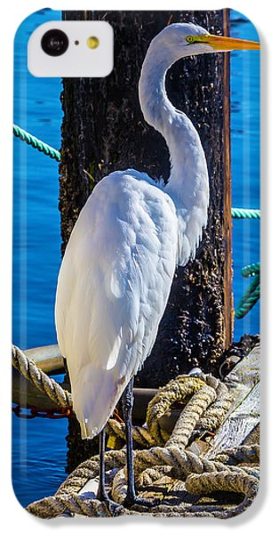 Great White Heron IPhone 5c Case by Garry Gay