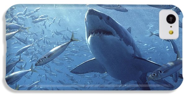 Great White Shark Carcharodon IPhone 5c Case