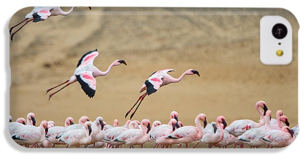 Greater Flamingos Phoenicopterus IPhone 5c Case by Panoramic Images