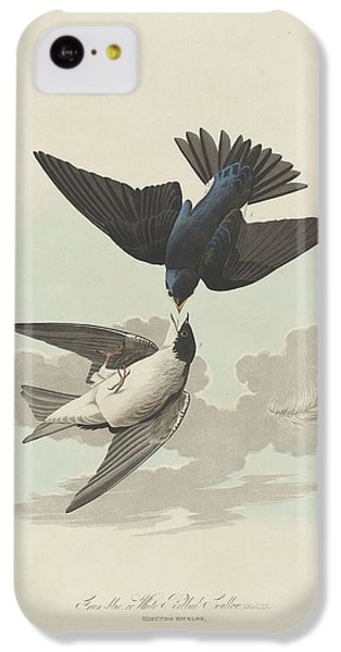 Green-blue Or White-bellied Swallow IPhone 5c Case by Anton Oreshkin