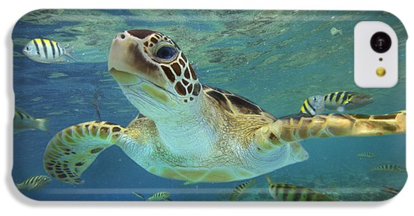 Green Sea Turtle Chelonia Mydas IPhone 5c Case by Tim Fitzharris