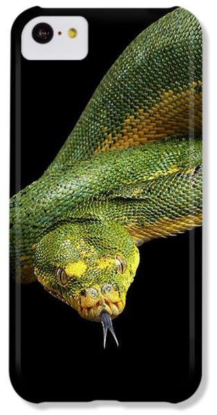 Green Tree Python. Morelia Viridis. Isolated Black Background IPhone 5c Case