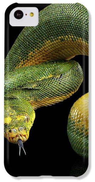 Green Tree Python. Morelia Viridis. Isolated Black Background IPhone 5c Case by Sergey Taran