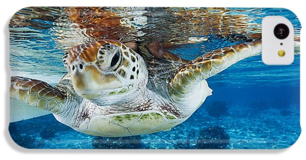 Turtle iPhone 5c Case - Green Turtle by Alexis Rosenfeld