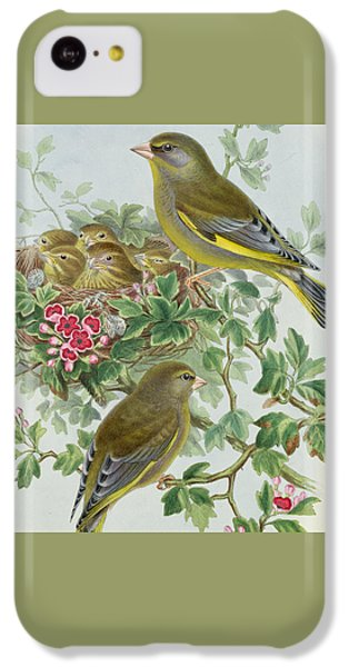 Greenfinch IPhone 5c Case by John Gould