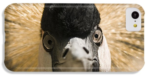 Grey Crowned Crane IPhone 5c Case by Chad Davis