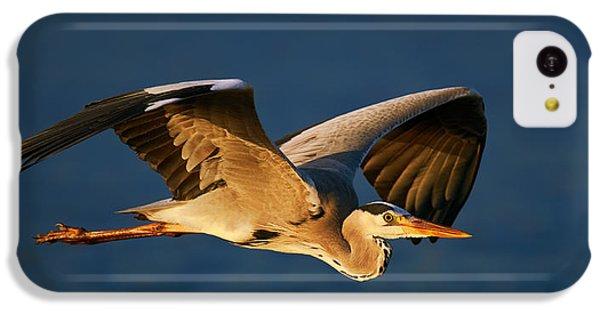 Heron iPhone 5c Case - Grey Heron In Flight by Johan Swanepoel