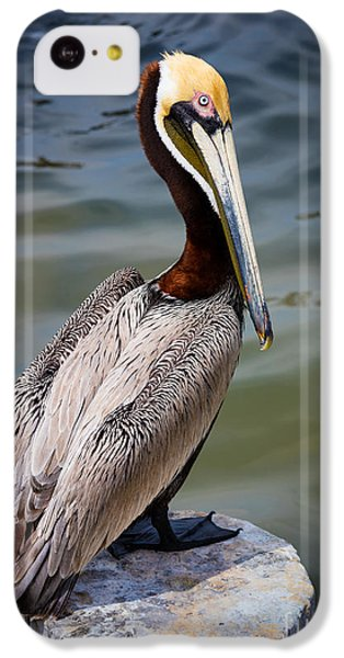 Grey Pelican IPhone 5c Case by Inge Johnsson