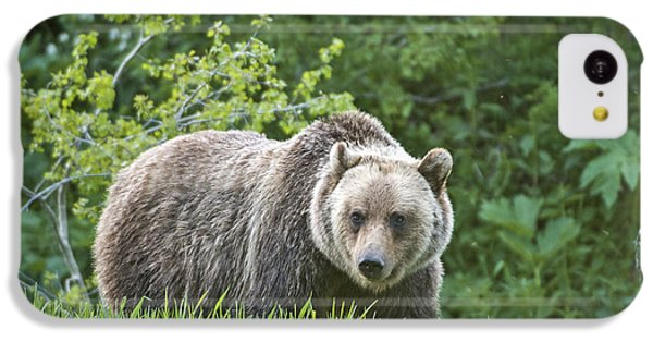 IPhone 5c Case featuring the photograph Grizzly Bear by Gary Lengyel