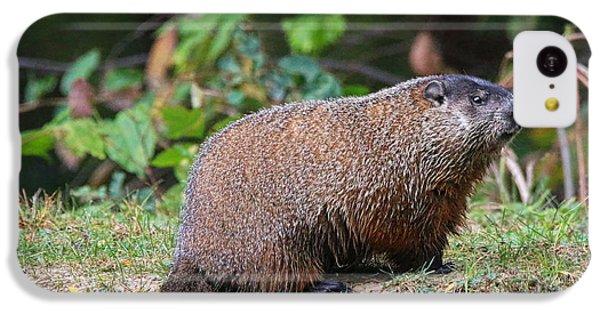 Groundhog  0590 IPhone 5c Case by Jack Schultz