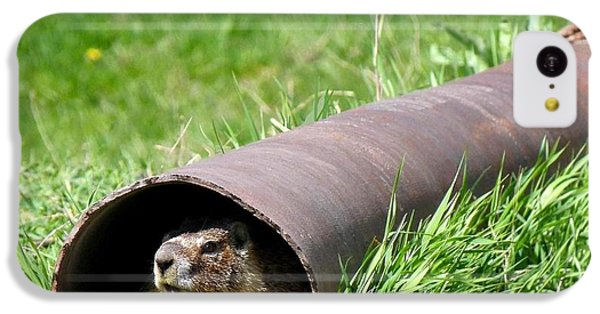 Groundhog In A Pipe IPhone 5c Case by Will Borden