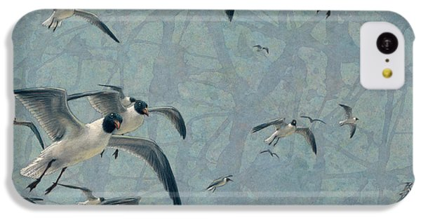 Seagull iPhone 5c Case - Gulls by James W Johnson