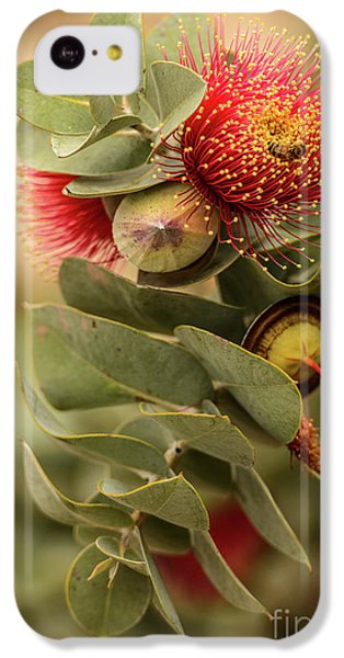 IPhone 5c Case featuring the photograph Gum Nuts by Werner Padarin