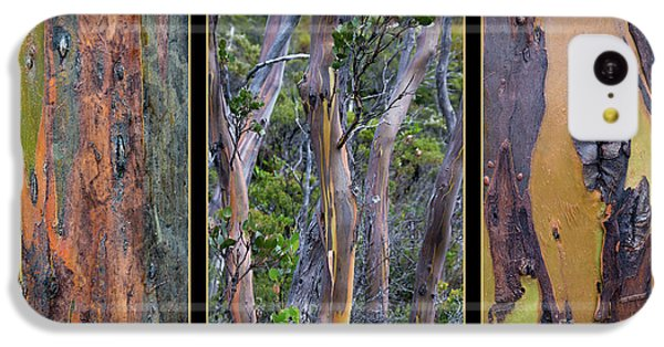 Gum Trees At Lake St Clair IPhone 5c Case by Werner Padarin