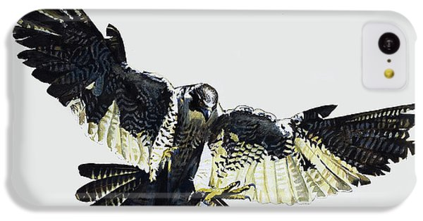 Buzzard iPhone 5c Case - Hawk by English School