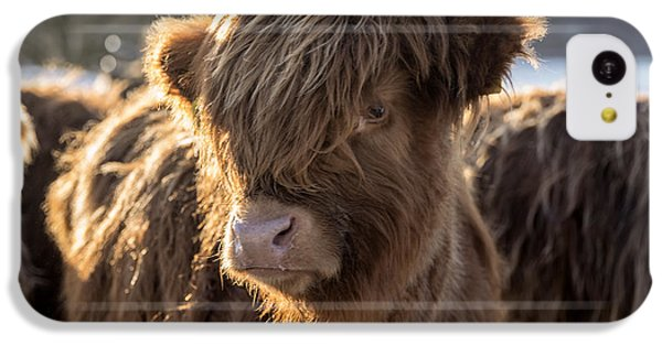 Highland Baby Coo IPhone 5c Case