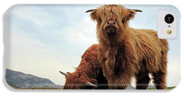 Bull iPhone 5c Case - Highland Cow Calves by Grant Glendinning
