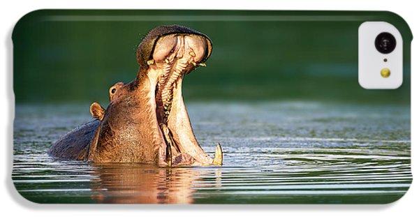 Hippopotamus IPhone 5c Case