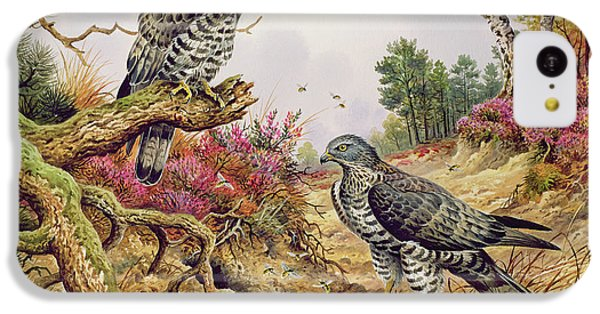 Honey Buzzards IPhone 5c Case by Carl Donner