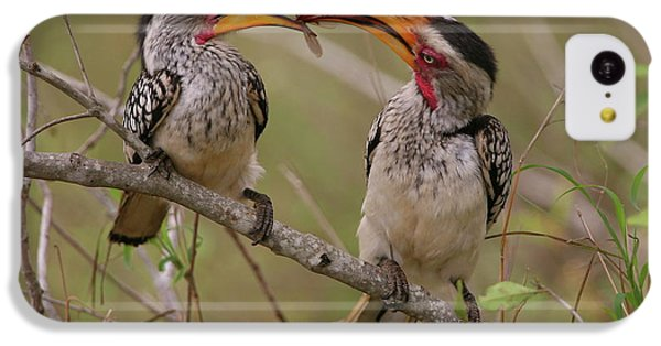Hornbill Love IPhone 5c Case by Bruce J Robinson