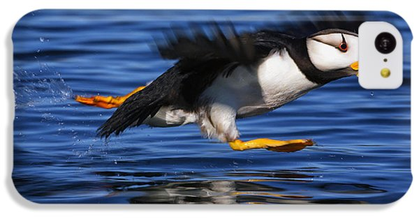 Horned Puffin  Fratercula Corniculata IPhone 5c Case by Marion Owen