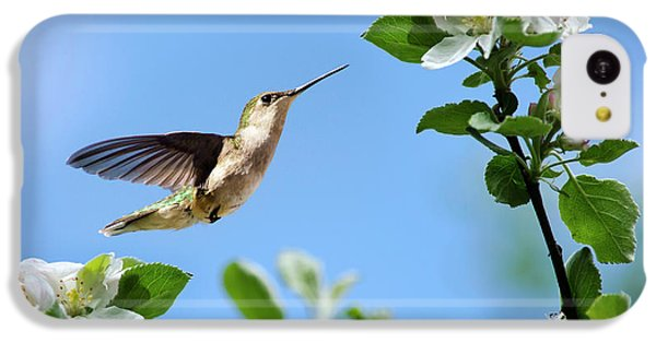 Hummingbird Springtime IPhone 5c Case