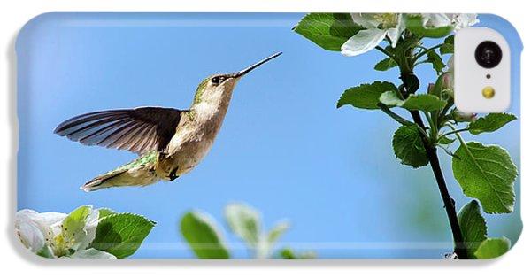 Hummingbird Springtime IPhone 5c Case by Christina Rollo