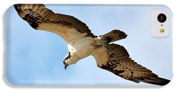 Hunter Osprey IPhone 5c Case by Carol Groenen