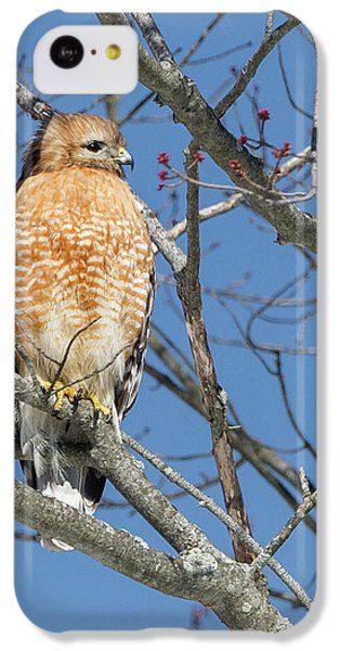 IPhone 5c Case featuring the photograph Hunting by Bill Wakeley