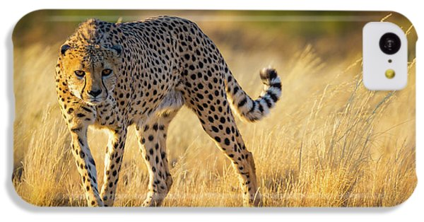 Hunting Cheetah IPhone 5c Case