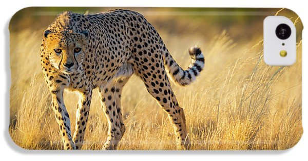 Hunting Cheetah IPhone 5c Case by Inge Johnsson