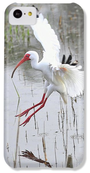 Ibis Soft Water Landing IPhone 5c Case by Carol Groenen