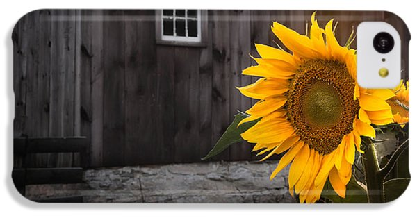 Sunflower iPhone 5c Case - In The Light by Bill Wakeley