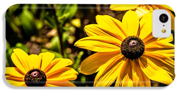 Indian Summer Gloriosa Daisy IPhone 5c Case