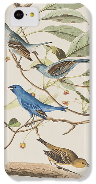 Finch iPhone 5c Case - Indigo Bird by John James Audubon