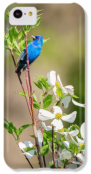 Indigo Bunting In Flowering Dogwood IPhone 5c Case by Bill Wakeley