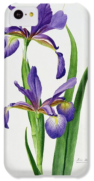 Iris Monspur IPhone 5c Case by Anonymous