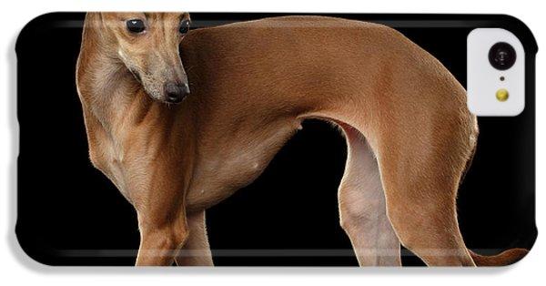 Dog iPhone 5c Case - Italian Greyhound Dog Standing  Isolated by Sergey Taran