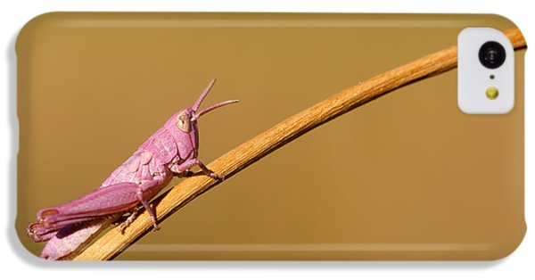Grasshopper iPhone 5c Case - It's Not Easy Being Pink by Roeselien Raimond