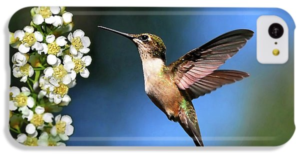 Humming Bird iPhone 5c Case - Just Looking by Christina Rollo