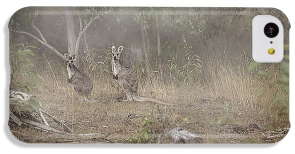 Kangaroos In The Mist IPhone 5c Case by Az Jackson