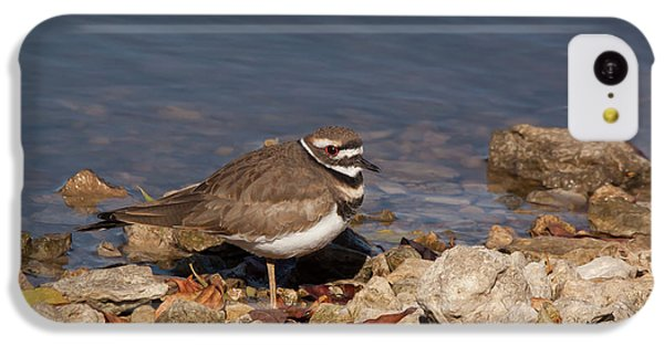 Killdeer iPhone 5c Case - Kildeer On The Rocks by Robert Frederick