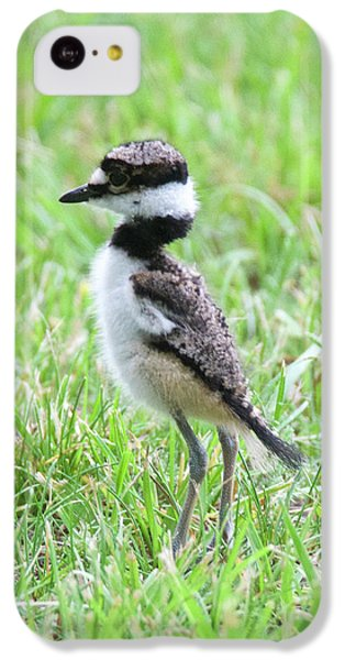 Killdeer iPhone 5c Case - Killdeer Chick 3825 by Michael Peychich