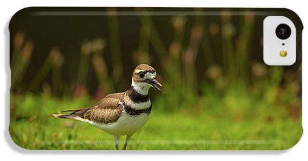 Killdeer iPhone 5c Case - Killdeer by Karol Livote