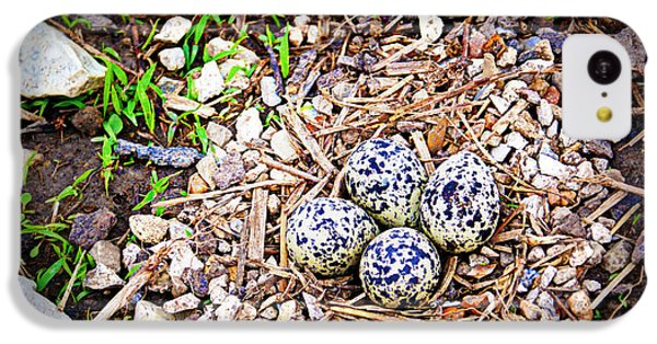 Killdeer iPhone 5c Case - Killdeer Nest by Cricket Hackmann