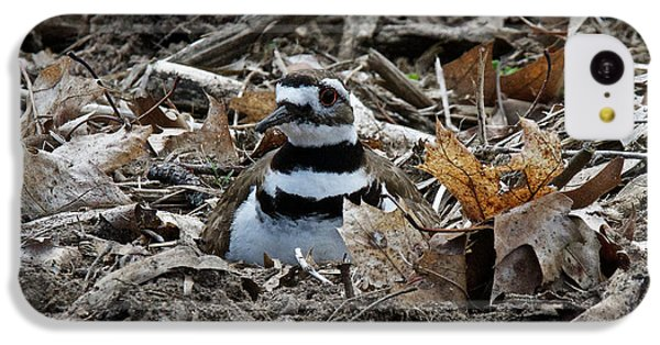 Killdeer iPhone 5c Case - Killdeer On It's Nest 2682 by Michael Peychich