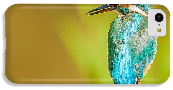 Kingfisher IPhone 5c Case by Paul Neville