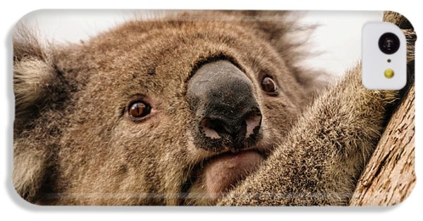 Koala 3 IPhone 5c Case by Werner Padarin