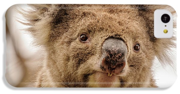 Koala 4 IPhone 5c Case by Werner Padarin