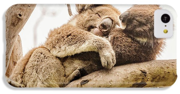 Koala 5 IPhone 5c Case by Werner Padarin